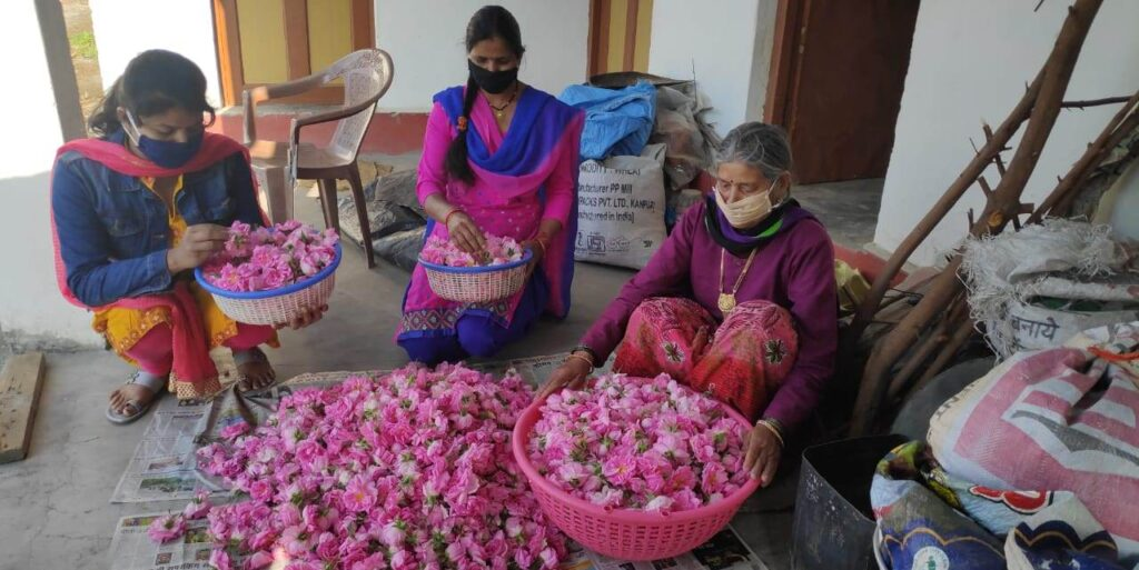 Indian rose farmers