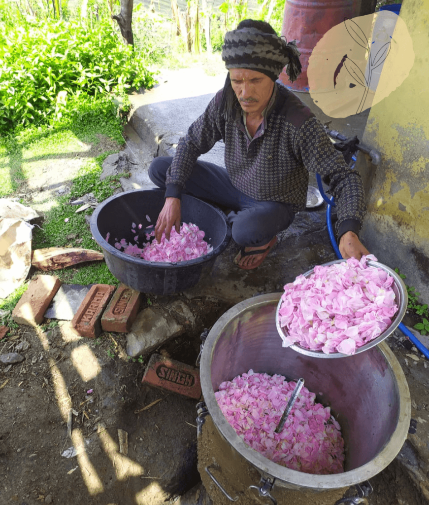Damask petals - cleaning