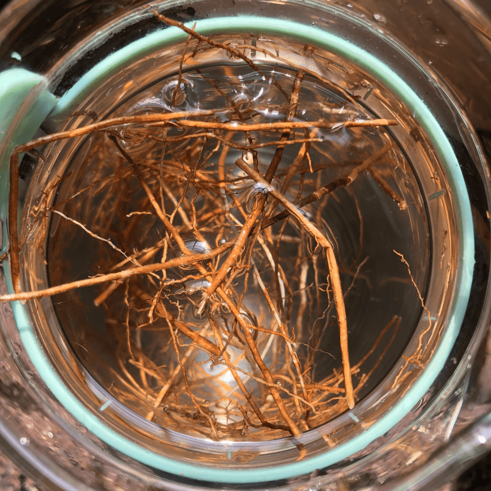 Vetiver cooling water
